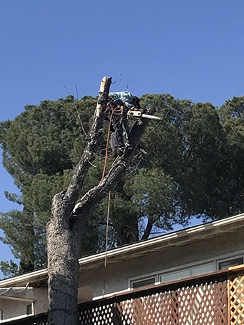 Los Angeles Dead Tree Cutting And Hauling Away