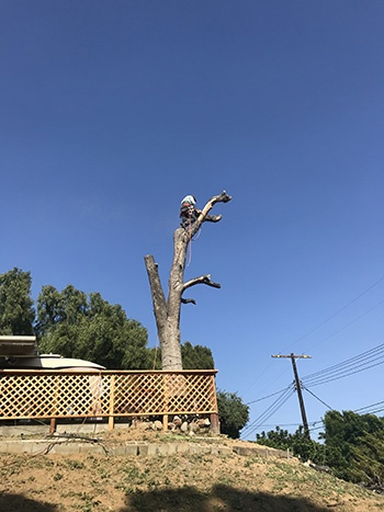 Dead Tree Removal Los Angeles - Los Angeles County Property